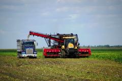 Beet Harvest